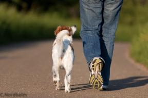 Die Spaziergänge starten wieder :-)